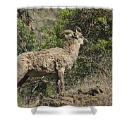 Ewe 1 Shower Curtain