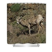 Ewe 5 Shower Curtain
