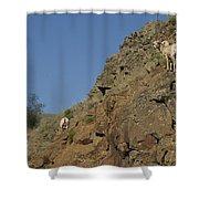 Ewe 6 Shower Curtain