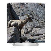 Ewe Bighorn Sheep Shower Curtain