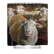 Ewes In The Paddock Shower Curtain