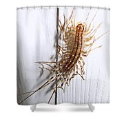 Ewwweeeeee Shower Curtain