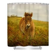Exmoor Wild Pony Shower Curtain