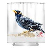 Myna Bird From Thailand Shower Curtain