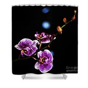 Exotic Orchid 6 Shower Curtain