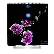 Exotic Orchid 6 V2 Shower Curtain