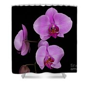 Exotic Orchids Shower Curtain