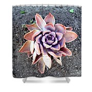 Exotic Succulent Plant - Pink Lilac Shower Curtain