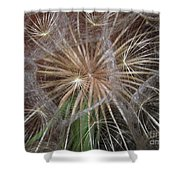Experience The Dandelion Shower Curtain
