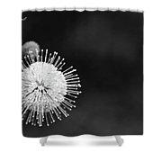 Exploding Blossom Shower Curtain