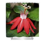 Exploding Red Flower Shower Curtain