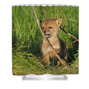 Exploring The Outside World Shower Curtain