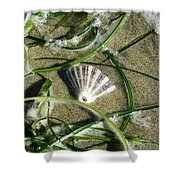 Exposed Shell Shower Curtain