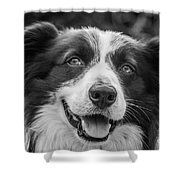 Expression Of A Border Collie Shower Curtain