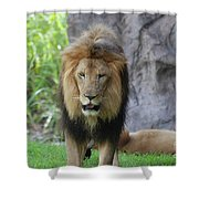 Expressive Male Lion Prowling Around In Nature Shower Curtain