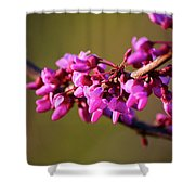 Extending Welcome Shower Curtain
