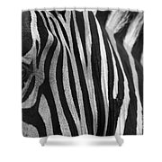 Extreme Close Up Of A Zebra Shower Curtain
