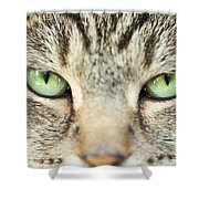 Extreme Close Up Tabby Cat Shower Curtain