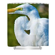 Eye-catching Shower Curtain