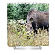Eye-contact With The Moose Shower Curtain