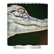 Eye Of The Alligator Shower Curtain
