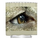 Eye Of The Canine Shower Curtain