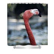 Eye Of The Flamingo Shower Curtain