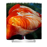 Eye Of The Flamingos Shower Curtain
