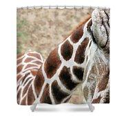 Eye Of The Giraffe. Shower Curtain