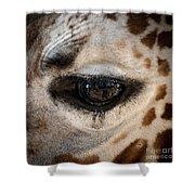 Eye Of The Giraffe Shower Curtain