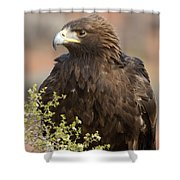 Eye Of The Golden Eagle Shower Curtain