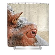Eye Of The Hippo Shower Curtain