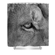 Eye Of The Lion #2  Black And White  Shower Curtain