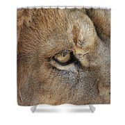 Eye Of The Lion #2 Shower Curtain