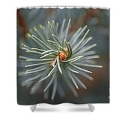 Eye Of The Pine Shower Curtain