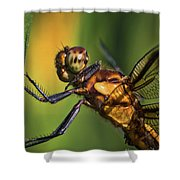 Eye To Eye Dragonfly Shower Curtain