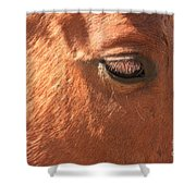 Eyelashes - Horse Close Up Shower Curtain
