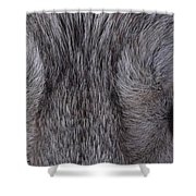 Eyes Of A Wolf Shower Curtain