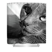 Eyes Of Russian Blue Shower Curtain