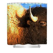 Eyes Of The Bison Spring 2018 Shower Curtain
