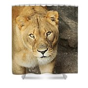Eyes Of The Lioness Shower Curtain