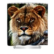 Eyes Of The Young King Shower Curtain