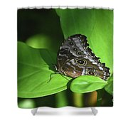 Eyespots On The Closed Wings Of A Blue Morpho Butterfly Shower Curtain