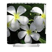 F1 Plumeria Frangipani Flowers Hawaii Shower Curtain