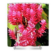 F10 Red Ginger Shower Curtain
