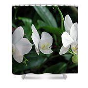 F11 Orchid Flowers Shower Curtain