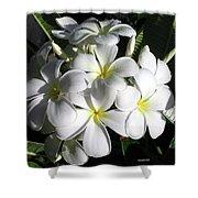 F13-plumeria Flowers Shower Curtain