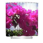 F15 Bougainvilleas Flowers Shower Curtain
