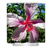 F17 Pink Hibiscus Shower Curtain