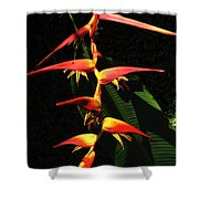 F19 Heliconia Flowers Hawaii Shower Curtain